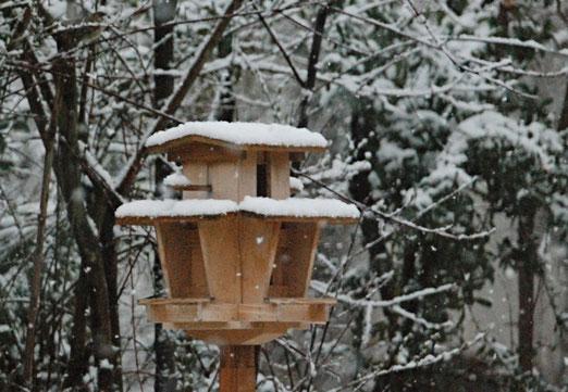 17. März 2021 - Das Arrangement stimmt - es fehlen nur die Vögel