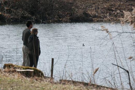 21. April 2012 - Entchen im Silbersee