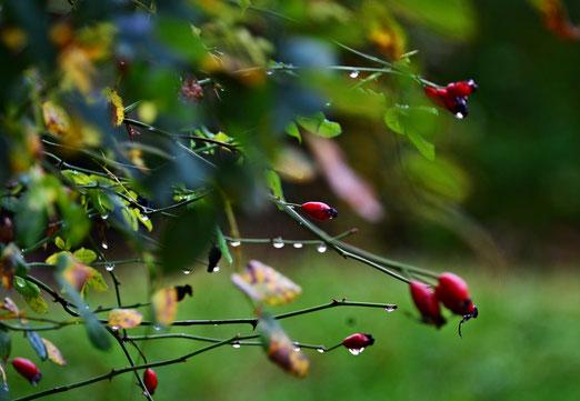 09. Oktober 2019 - Im Regen stehen