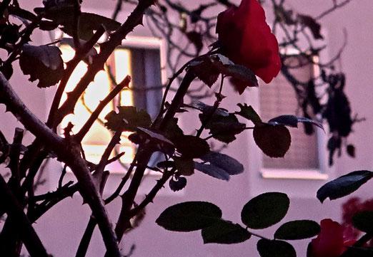 22. Oktober 2020 - Morgenstimmung. Wenn sich die Sonne im Fenster des Nachbarn spiegelt.