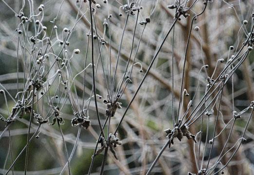 26. Dezember 2018 - Frostige Zeit