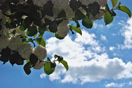 31. Mai 2021 - Endlich wieder (fast) blauer Himmel