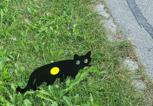 20. September 2020 - Achtung Katze!