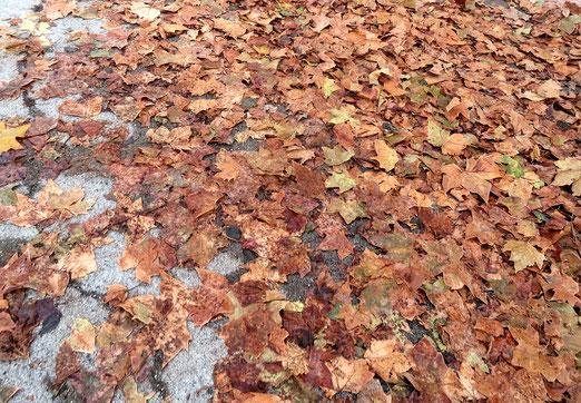 26. Oktober 2018 - Es gibt nicht nur den schönen, es gibt auch den schmutzigen Herbst