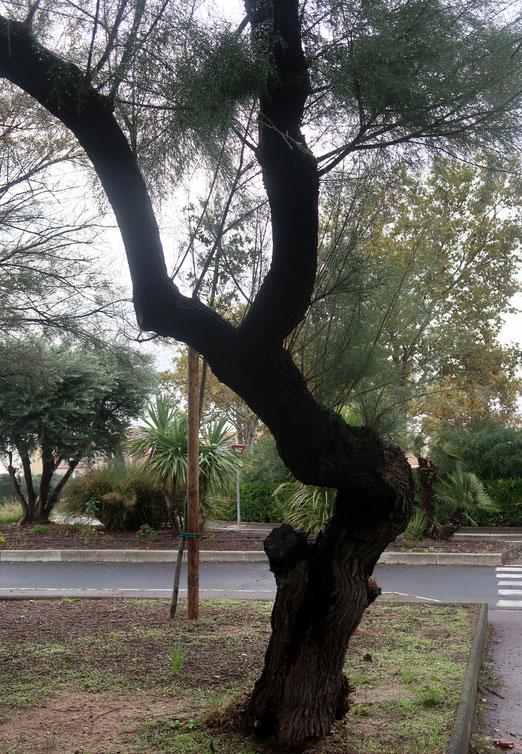 19. Oktober 2018 - Wind und Wetter getrotzt