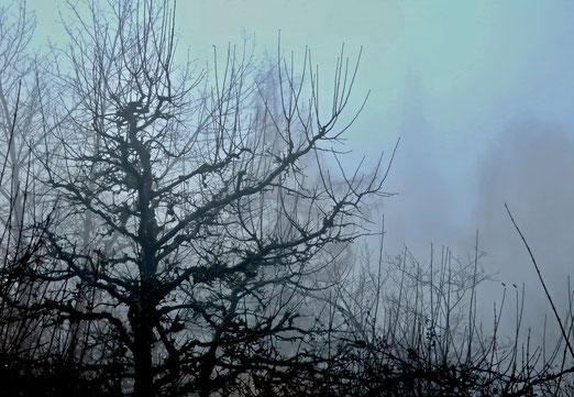 26. Dezember 2019 - Statt im Schnee - im Nebel versunken