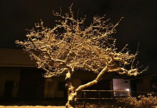 14. Februar 2018 - Winterbaum