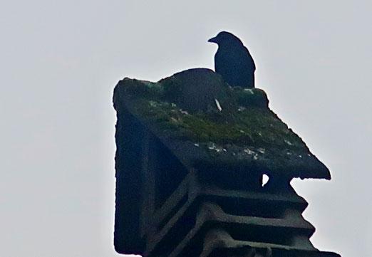 03. Dezember 2019 - Der schwarze Wächter auf dem Dach