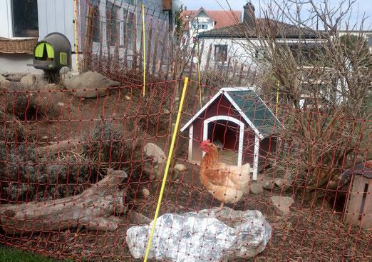 3265 - 07. März 2021 - Ein häusliches Huhn