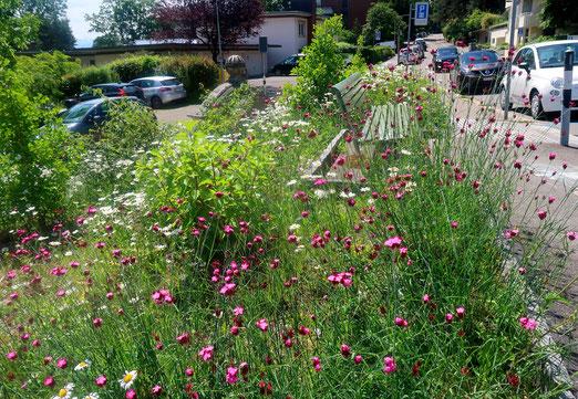 31. Mai 2018 - Dorfidylle? -Nein, Stadtquartier! Naturwiese - wo steril gepflegter Rasen war!