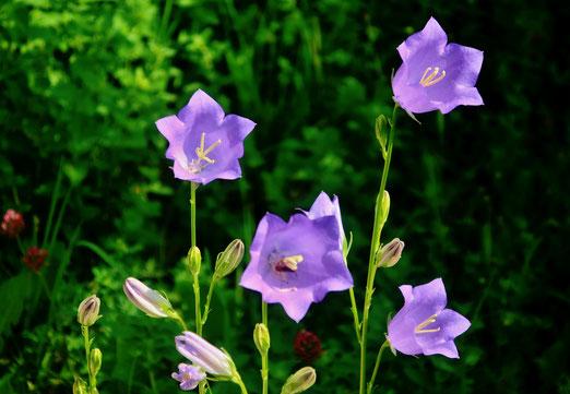 24. Mai 2020 - Blumen gestern, Blumen heute, Blumen ...
