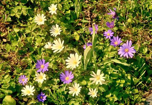 """12. April 2020 - Osterspaziergang: """"""""Jeder sonnt sich heute so gern. Sie feiern die Auferstehung des Herrn, denn sie sind selber auferstanden: .... sind sie alle ans Licht gebracht. """" (Johann Wolfgang von Goethe, Faust I)"""
