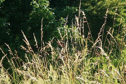 13. Juni 2020 - Naurwiese statt Rasen
