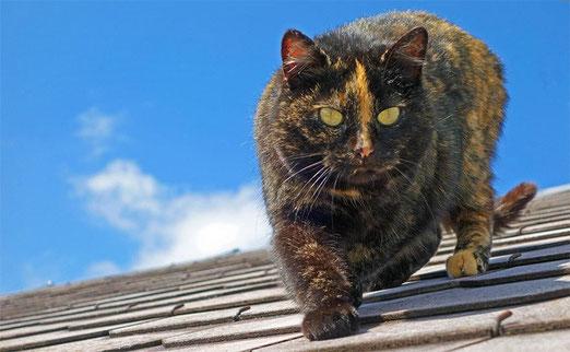 Die Katze auf dem Hausdach bedeutet höchste Gefahr für alle Vögel.