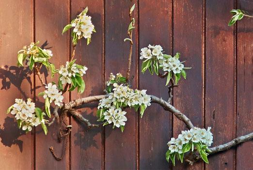 17. April 2021 - Sie haben den Frühlingsfrost überlebt