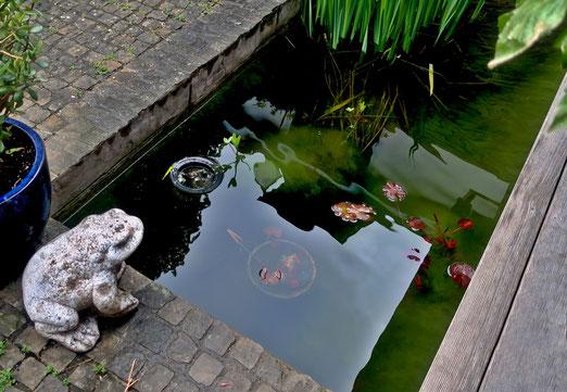 05. Mai 2021 - Bei diesem Wetter will selbst der Frosch nicht ins Wasser springen