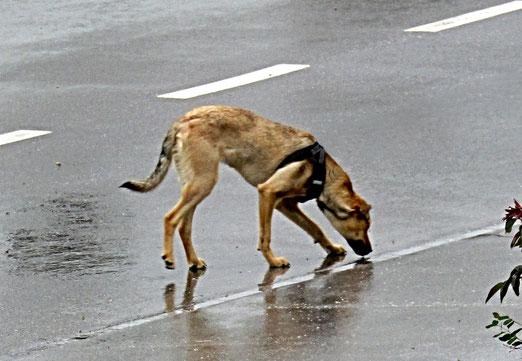02. Mai 2021 - Hundswetter
