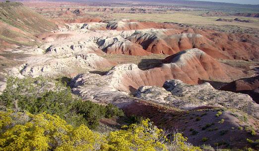 In der Nähe von Holbrook: Vom Petrified Desert zum Petrified Forest National Park