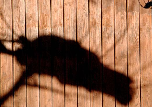 20. Januar 2021 - Ein Gespenst geht um!