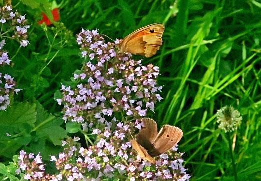27. Juli 2020 - Pastellfarben der Natur