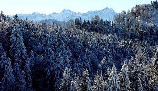 """Lutz, Grub/AR - """"Endlich"""" Winter in der Ostschweiz. Im Hiuntergrund der Alpstein."""