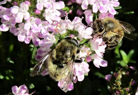 02. Juni 2021 - Blume, gib mir deinen Honig