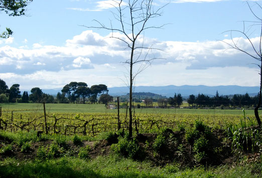 12. Mai 2012 - Languedoc