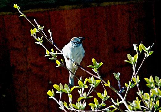 11. April 2021 - Ein Vogel hat niemals Angst davor, dass der Ast unter ihm brechen könnte. Nicht weil er dem Ast vertraut, sondern seinen eigenen Flügeln (Sinnspruch)