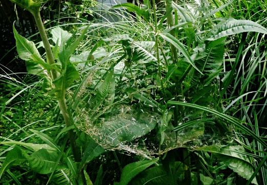 28. Juli 2020 - Arme Spinne. Soviel Unrat im Netz und nichts Leckeres