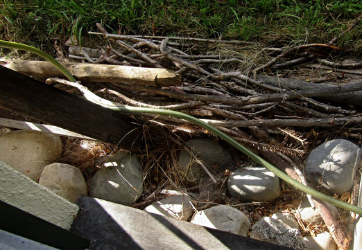 07. Oktober 2020 - Wer oder was schlängelt sich denn da durch das Holz?