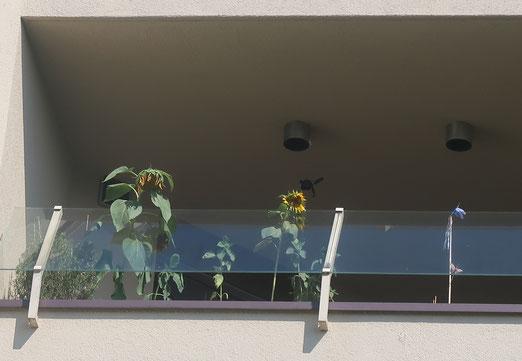 06. Juli 2018 - Trauriges Dasein inmitten von Beton - aber mit schöner Aussicht