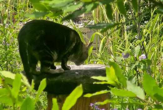 29. Juni 2020 - Auch Katzen haben mal Durst