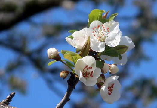 3288 - 30. März 2021 - Ein, zwei warme, sonnige Tage - der Frühling ist da