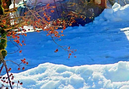 24. Januar 2021 - Zwischen Winter und (gefühltem) Frühling