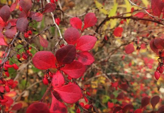 09. November 2020 - Es sind die Faben, die den Herbst fröhlich machen