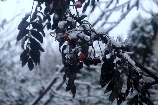 25. Dezember 2020 - White Christmas