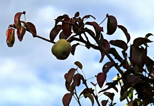 06. Oktober 2020 - Vergessene Frucht
