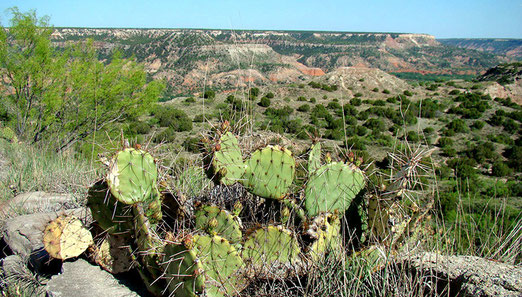 Abstecher in den Palo Duro Canyon. Der zweitgrösste Canyon der USA, ist fast 200 km lang und teilweise bis 30 km breit.