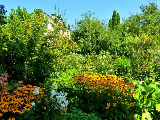09. September 2019 - Wenn der Hausgarten droht das Haus zu ersticken