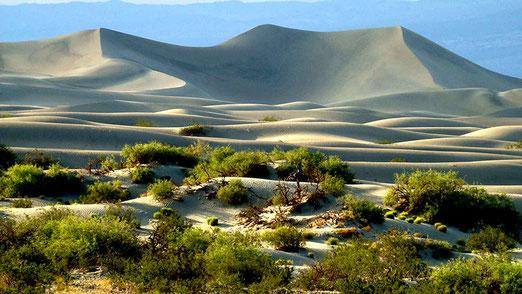Wenn man das Death Valley durchquert kommt man zwangsläufig an den Mesquite Flats Sanddünen vorbei. Diese erstrecken sich über ca. 36km2.