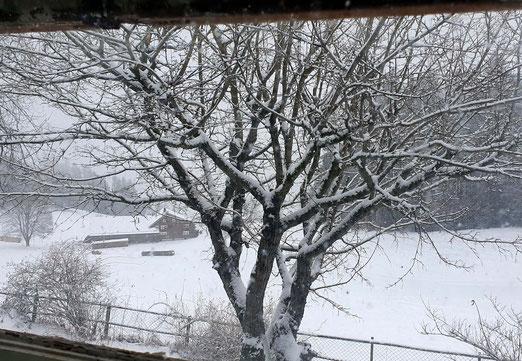 07. Januar 2021 - Es ist kalt da draussen
