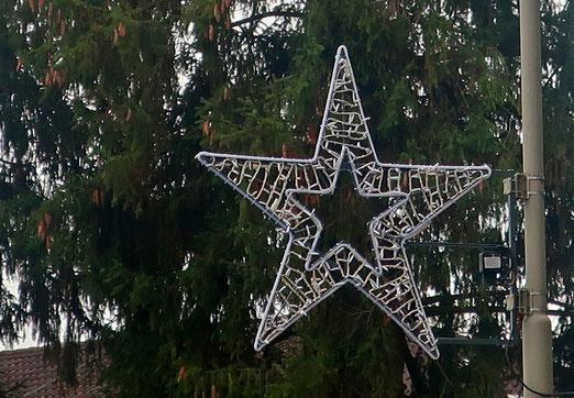 21. November 2020 - Sie sind schon da, die Weihnachtssterne, doch sie leuchten noch nicht.