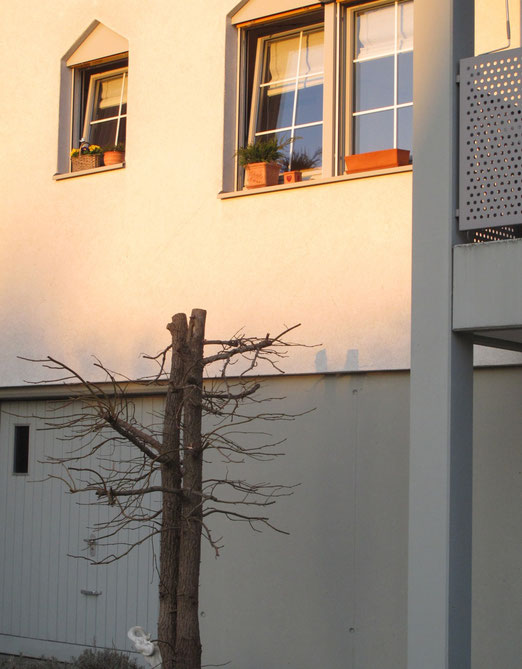 14. März 2012 - Natur vor dem Fenster
