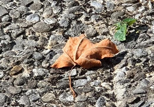 22. September 2020 - Es ist halt doch Herbst geworden