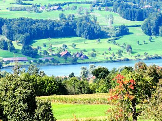 Das Seetal ist das grösste Rebgebiet im Kanton Luzern (Foto: Peter Gloor)