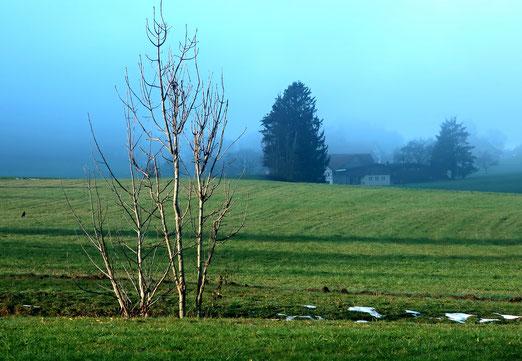 18. Dezember 2020 - Endlich! Die Sonne jagd den Nebel fort.