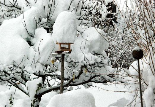 17. Januar 2021 - Ob die Vögel den Futtertrog finden?