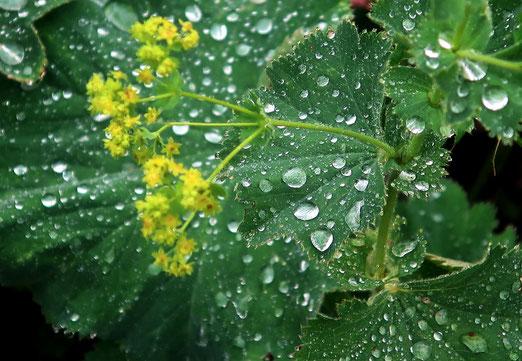05. Juni 2020 - Wenn Regentropfen fallen, spiegeln sich auch Freud und Leid im mystischen Licht