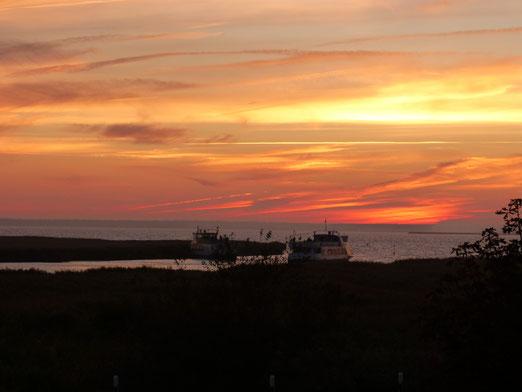 Auf der Insel Auf der Fischland-Darß-Zings an der Ostsee (Foto: Manfred Leicht)