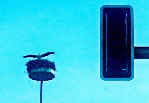 21. Juni 2021 - Muss sich der Storch, hoch über der Verkehrsinsel, auch an die Verkehrsregeln halten?